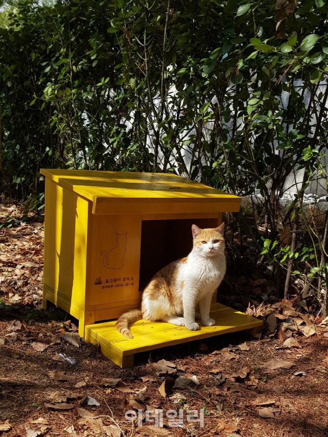[동네방네]서초구, 재건축지역에 '길고양이 급식소' 추가 설치