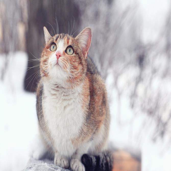 [카드뉴스] 겨울철 길고양이를 대하는 법