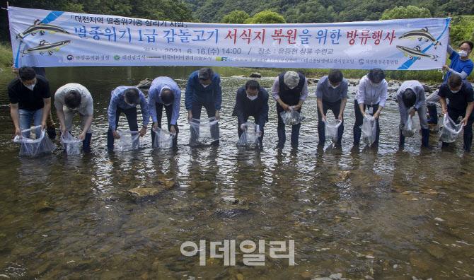 한국타이어, 대전 유등천에 멸종위기종 `감돌고기` 방류