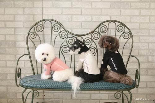 """디자이너 펫 브랜드 """"DASOM(다솜)"""", 트렌디한 강아지옷 패션 이끈다"""