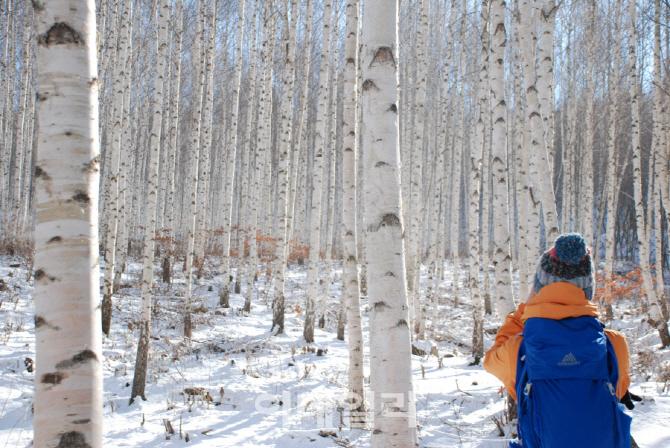 눈꽃트레킹 등 톡톡 튀는 겨울 이색여행
