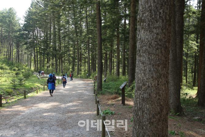①당신의 마음을 사로잡는 초록 숲, 포천 국립수목원