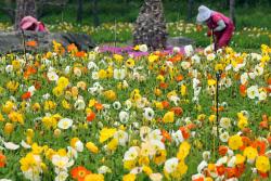 2일 맑고 포근한 봄날씨…서울 낮 최고 22도