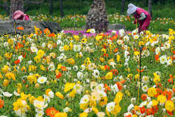 맑고 포근한 봄날씨…서울 낮 최고 22도