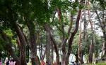 [여행] 푸르고 고요한 숲, 장쾌한 폭포…선비와 같아라