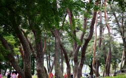 [여행] 푸르고 고요한 숲, 장쾌한 폭포…올곧은 선비와 같아라