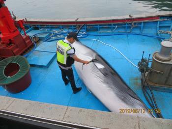 포항 5m 밍크고래 혼획