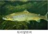 위해우려종 대서양연어 사전관리…제2의 배스 사태 막는다