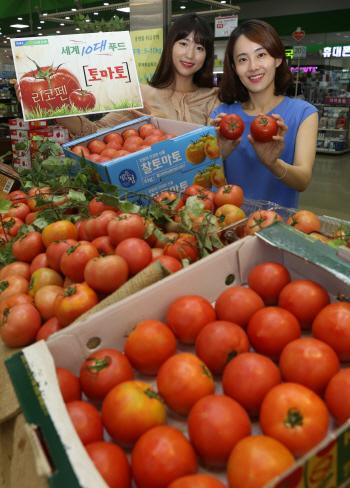 농협유통, 강원도 고랭지 찰토마토 할인판매