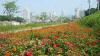 의정부시, 가을맞이 중랑천 꽃길 조성