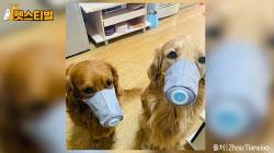 우리 집 강아지도 '마스크' 써야 할까? (영상)