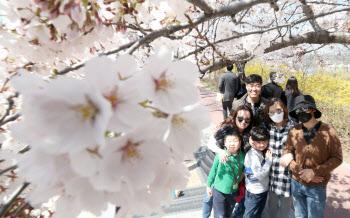 아쉬운 봄...벚꽃길 통제