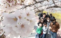 [포토]아름다운 벚꽃, 내년 봄에 다시 만나요!