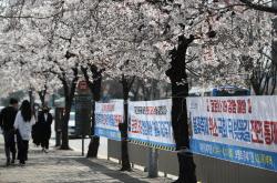 [포토]코로나19 확산 방지, '벚꽃놀이 오지 마세요'