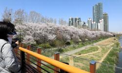 [포토] 멀리서 보는 벚꽃길