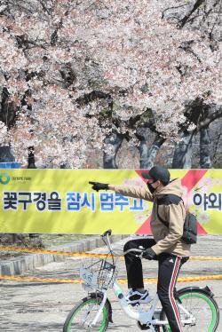 [포토]코로나19 예방을 위해 벚꽃 구경은 내년에…