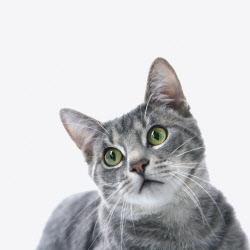"""""""中 우한서 고양이 코로나19 감염됐다"""""""