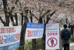 [포토]윤중로 벚꽃길 전면통제 12일 밤까지 연장