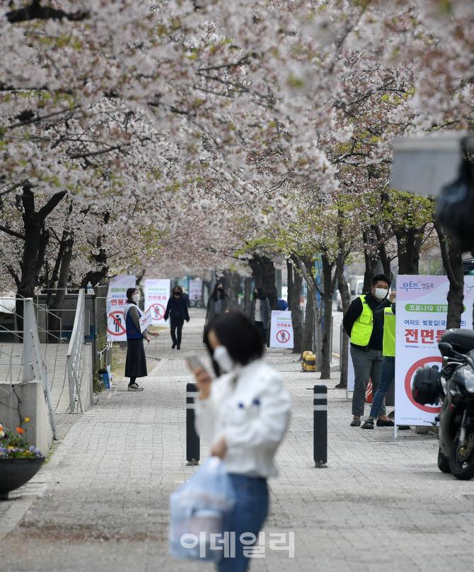 이번 주말에도 여의도 윤중로 벚꽃길 차단…정류장 폐쇄하고 우회
