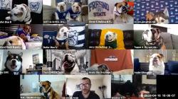 '개판 오분 전' 열 마리 강아지와 화상회의 해봤더니...(영상)