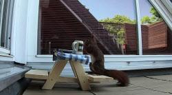 다람쥐 전용 테이블 만들어주자 벌어진 일(영상)