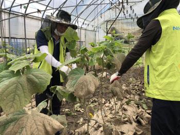 NH저축은행, 수해 피해 농가 복구 지원