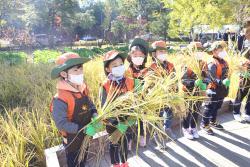 [포토] 꼬마농부들 벼베기 체험