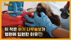 눈도 못 뜬 아기 나무늘보가 병원에 입원한 이유(영상)