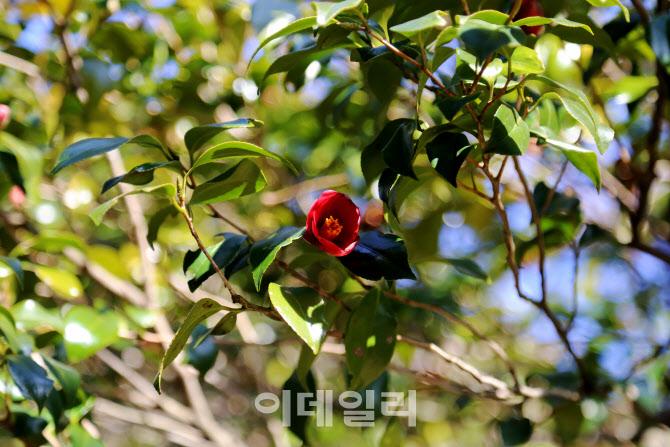 [여행] 동백꽃 필 무렵, 봄마중 갑니다