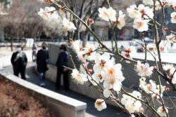 [포토]봄따라 찾아온 매화꽃