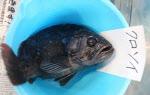 """후쿠시마 앞바다서 또 '방사능 생선'…""""주변 해역 이미 오염"""""""