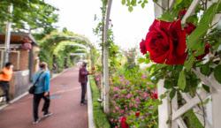 [포토]빨간 장미꽃