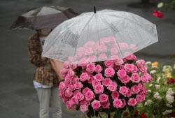 [포토]'장미 향기 가득'