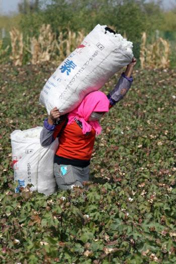 면화·토마토 이어 폴리실리콘..美, 강제노동 의혹 中제품 수입 중단