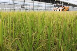 쌀 비축물량 늘리고 농식품 바우처 확대…국가식량계획 첫 수립