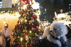올 겨울 크리스마스 트리 비싸진다…중국발 물류대란 탓