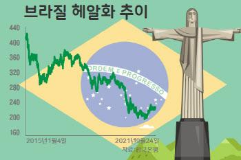 '비과세에 10% 이자'…브라질 채권의 재발견