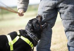 개 물림 사고 하루에 6건씩 발생…방지대책 시급