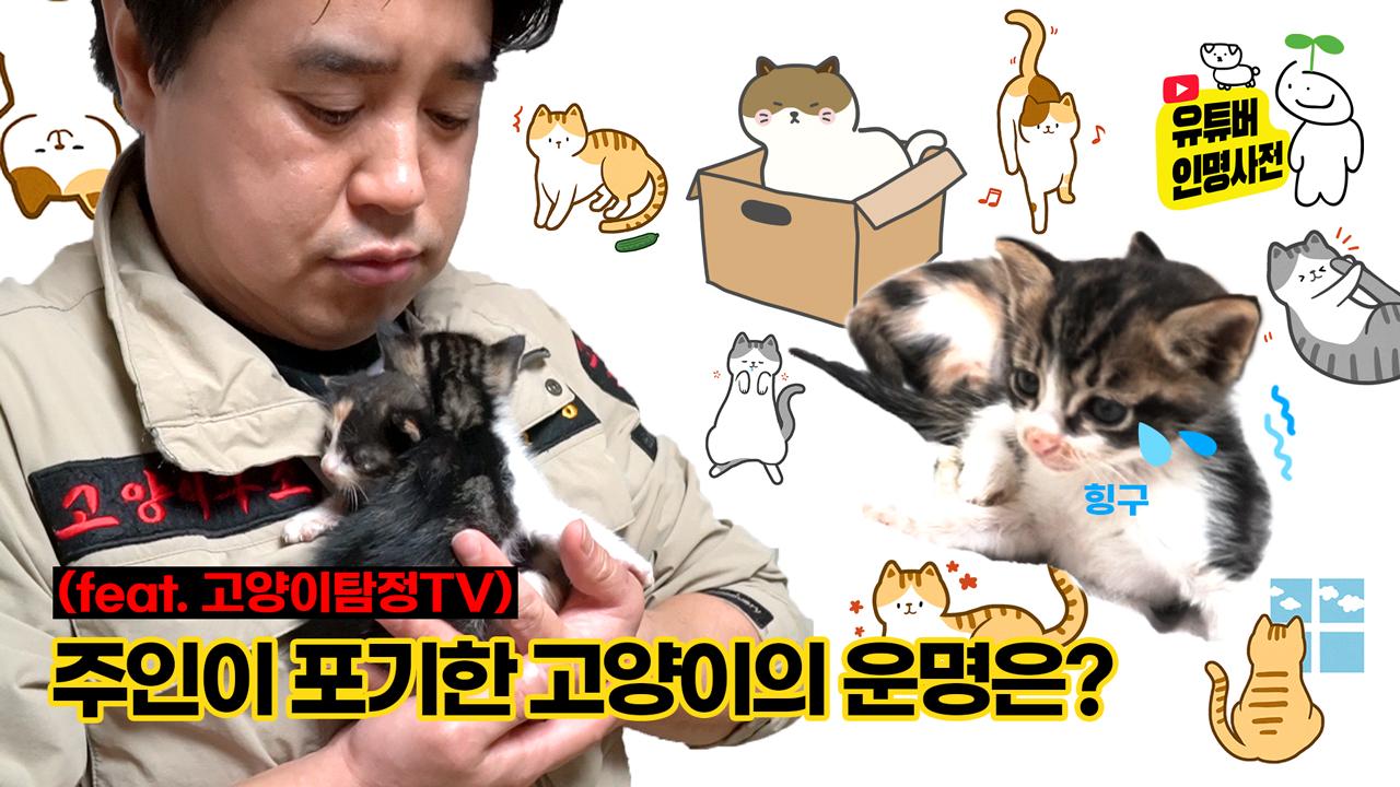 못 찾은 고양이, 주인의 무관심이 만든 결과죠(ft. 고양이탐정TV)