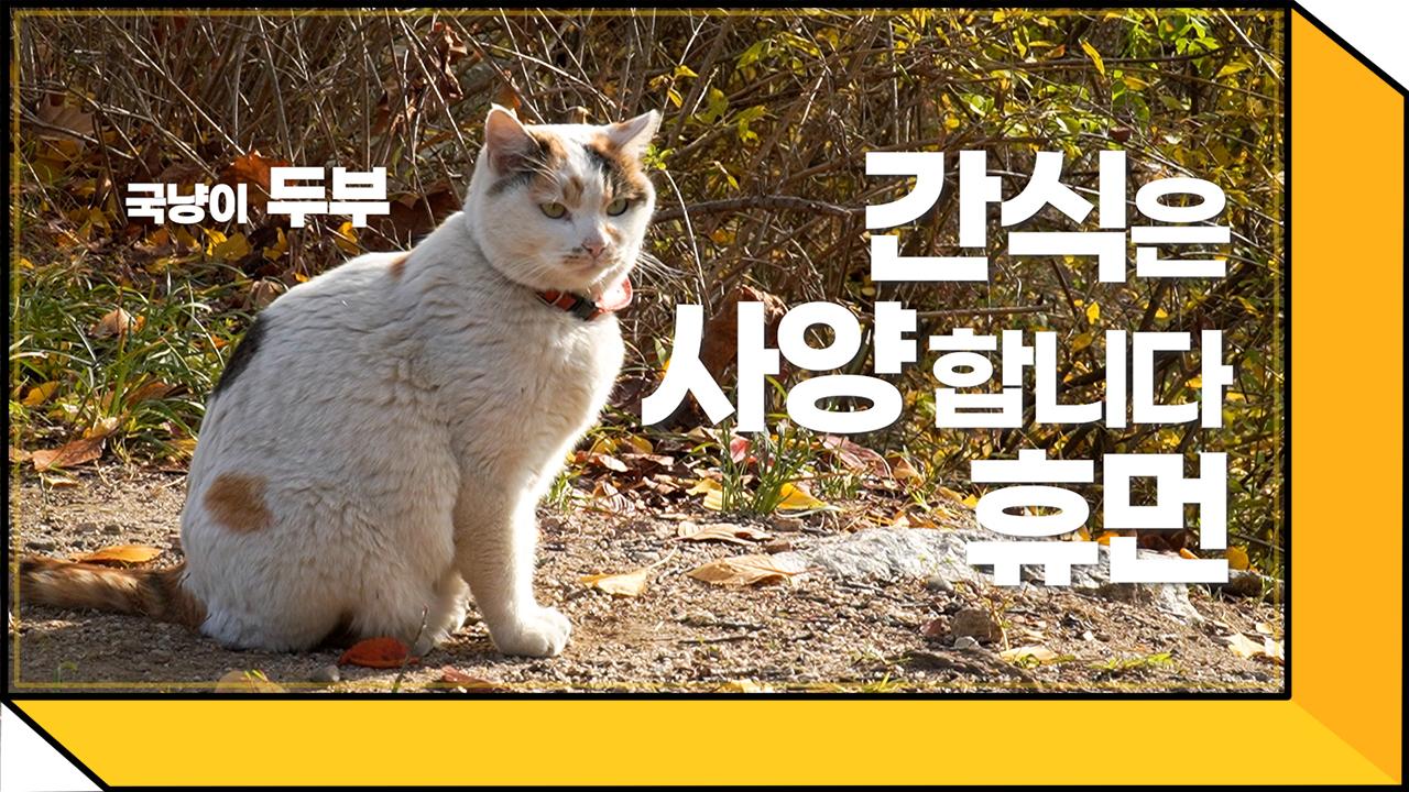 국민대 고양이들의 최신 근황은...?