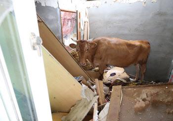 지붕에서 추락한 소